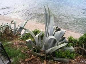 Chorvatsko- rostliny