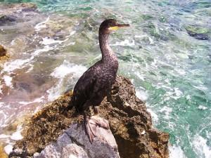 Chorvatsko- ptáček