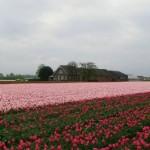 Hurá do Holandska – země sýrů, tulipánů i větrných mlýnů
