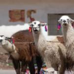 Nebezpečí v Peru