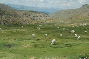 dovolená Peru