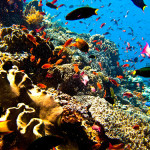Slevomat – levná dovolená u moře 2014