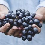 Šatov – místo na jihu Moravy, které vám nabídne víno i krásnou přírodu